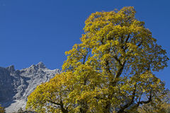 Autumn in Karwendel Stock Photos