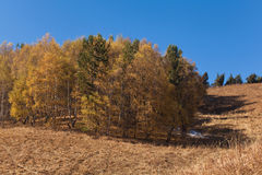 Autumn in Kazakhstan mountain Stock Images