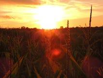 Autumn Kissed Sunset dourado Fotografia de Stock