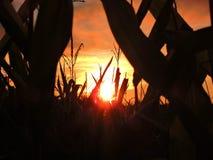 Autumn Kissed Sunset dourado Fotos de Stock Royalty Free