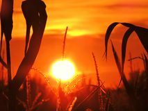 Autumn Kissed Sunset dourado Foto de Stock