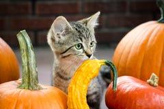Autumn Kitten Royalty Free Stock Image