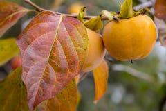 autumn kolorowa Zdjęcia Royalty Free