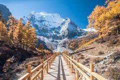 autumn kolorowa Zdjęcie Royalty Free