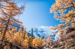 autumn kolorowa Fotografia Royalty Free
