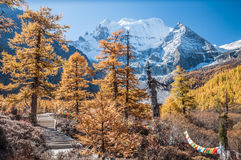 autumn kolorowa Obraz Royalty Free