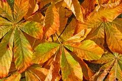 autumn kolorowa Obrazy Stock