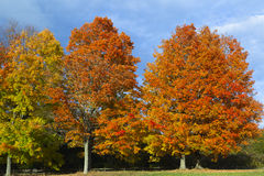 autumn kolorowa Obraz Stock
