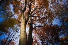 autumn kolorowe krajobrazu w kontekście niebieskie chmury odpowiadają trawy zielone niebo białe wispy natury Zdjęcie Royalty Free