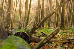 autumn kolorowe krajobrazu w kontekście niebieskie chmury odpowiadają trawy zielone niebo białe wispy natury Obrazy Stock
