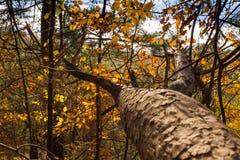 autumn kolorowe krajobrazu w kontekście niebieskie chmury odpowiadają trawy zielone niebo białe wispy natury Zdjęcie Stock