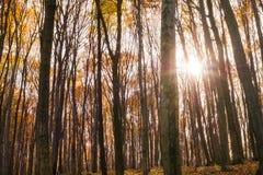 autumn kolorowe krajobrazu w kontekście niebieskie chmury odpowiadają trawy zielone niebo białe wispy natury Fotografia Royalty Free