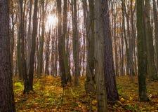 autumn kolorowe krajobrazu w kontekście niebieskie chmury odpowiadają trawy zielone niebo białe wispy natury Fotografia Stock