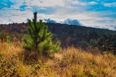 autumn kolorowe krajobrazu w kontekście niebieskie chmury odpowiadają trawy zielone niebo białe wispy natury Obrazy Royalty Free