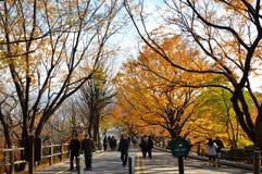 Autumn in Korea. Colorful of tree in South Korea Stock Image