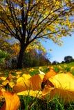 autumn krajobrazu Fotografia Royalty Free