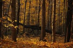 autumn krajobrazu Fotografia Stock