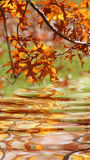 autumn krajobrazu Obraz Royalty Free