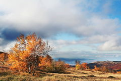 autumn krajobrazy Zdjęcie Royalty Free