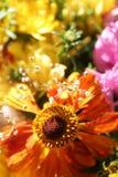autumn kwiaty Fotografia Royalty Free