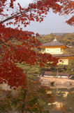 Autumn in Kyoto. Kinkakuji of autumn in Kyoto Royalty Free Stock Images