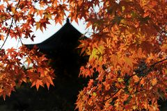 Autumn in Kyoto Royalty Free Stock Images