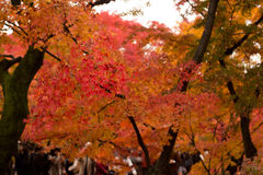 Autumn in kyoto,japan Royalty Free Stock Images