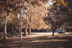 Autumn in LA Royalty Free Stock Images