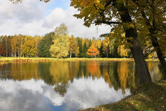 Autumn Lake. In the Forest Stock Images