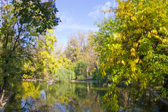 Autumn lake. Lake with autumn colored trees and blue sky royalty free stock photo