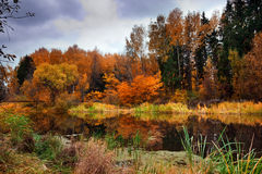 Autumn Lake. Landscape with forest lake in autumn rainy day Royalty Free Stock Photo
