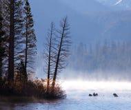 Autumn lake Royalty Free Stock Images