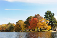 Autumn on lake. Multi-colored autumn trees on the bank of lake Stock Photos