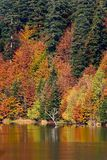 Autumn on lake. Autumn on peaceful lake and dense evergreen forest Stock Image