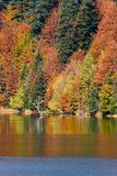 Autumn on lake. Smooth surface and dense forest in background Royalty Free Stock Images