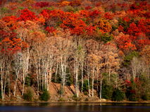 Autumn on the Lake. Cluster of trees in autumn on lake Royalty Free Stock Images
