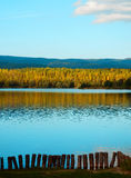 Autumn lake and birch trees forest Royalty Free Stock Photos