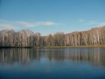 Autumn lake - birh trees Stock Photography