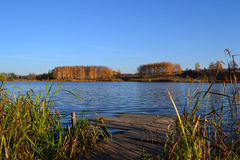 Autumn lake. With blue water, reeds and smoke-trees, bridge for fishing Stock Images