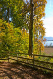 Autumn by lake chiemsee Stock Image