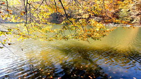 Autumn on the Lake. Colorful fall foliage reflects in the Lake on an autumn day, full HD video stock footage