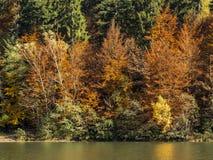Autumn at a lake Royalty Free Stock Photo