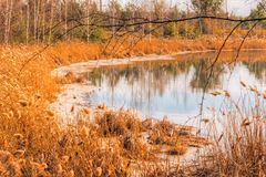 Autumn lake with dry reeds. Warm autumn landscape with a lake and dry reeds growing near the shore. Nobody Stock Images