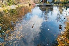 Autumn lake with ducks Royalty Free Stock Photos