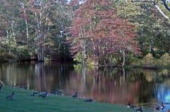 Autumn Lake en Connecticut Foto de archivo