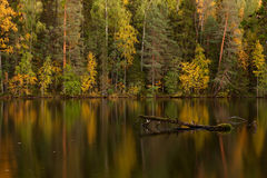 Autumn lake in Finland. Autumn lake with dead tree in a water in dusk (Finland Royalty Free Stock Image