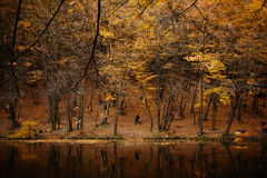 Autumn lake in forest Royalty Free Stock Image