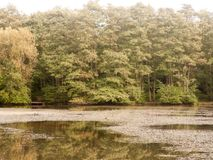 Autumn lake horizon landscape zoomed in scene trees and water su Stock Photos
