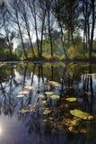 Autumn lake landscape Royalty Free Stock Photo