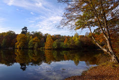 Autumn at the lake. Autumn landscape at a lake with pretty autumn colours and reflections Royalty Free Stock Image